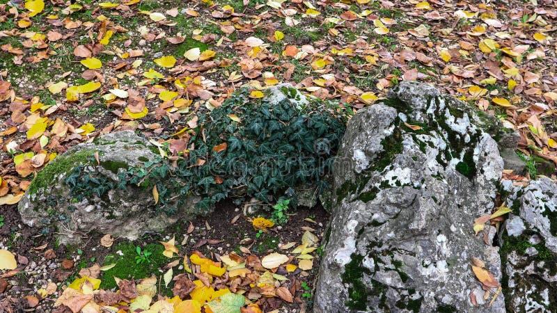 Detalhes de uma rocha e a terra coberta pelas folhas foto de stock royalty free