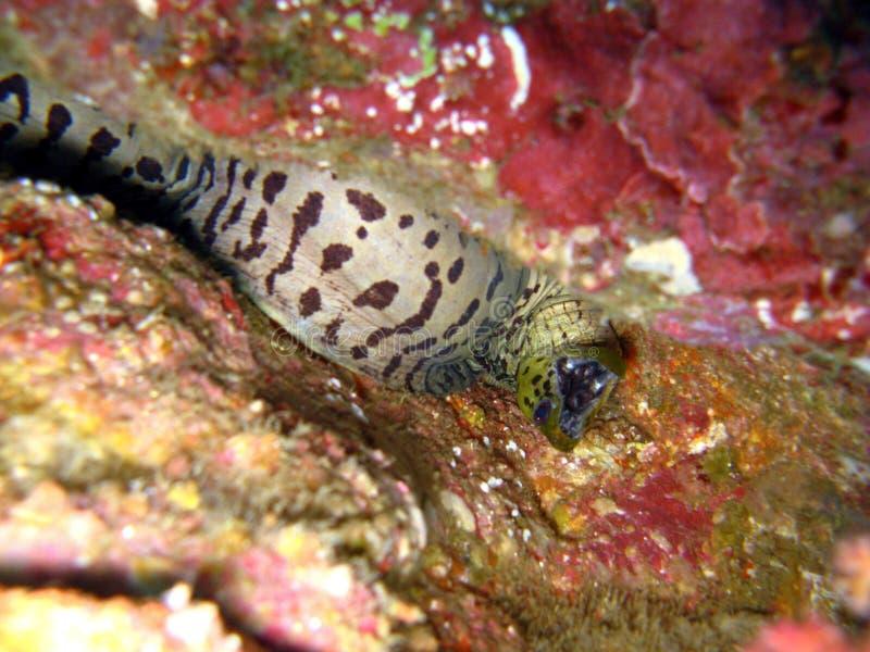 Detalhes de vida no recife coral fotos de stock