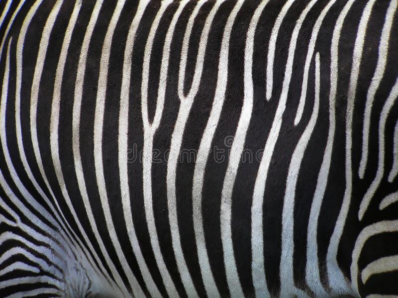 Detalhes de zebra fotografia de stock royalty free