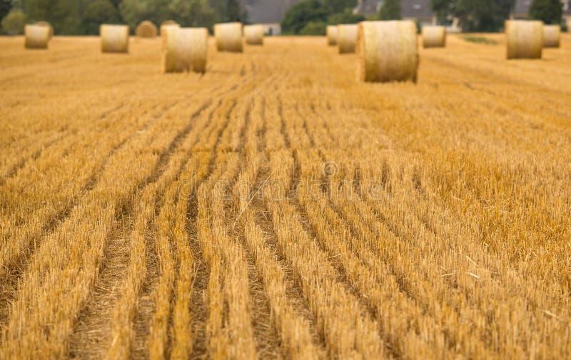 Detalhes do campo da agricultura foto de stock royalty free