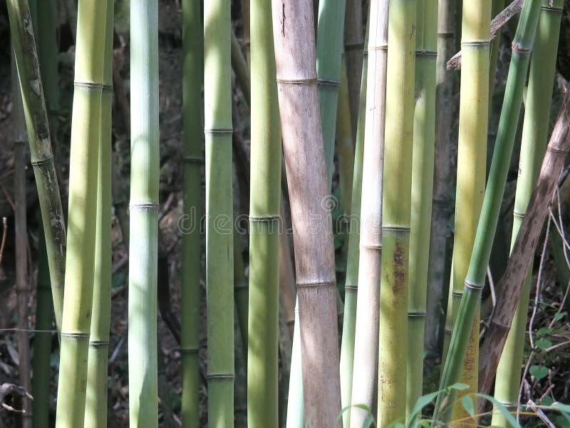 Detalj av bambuskogen arkivfoton