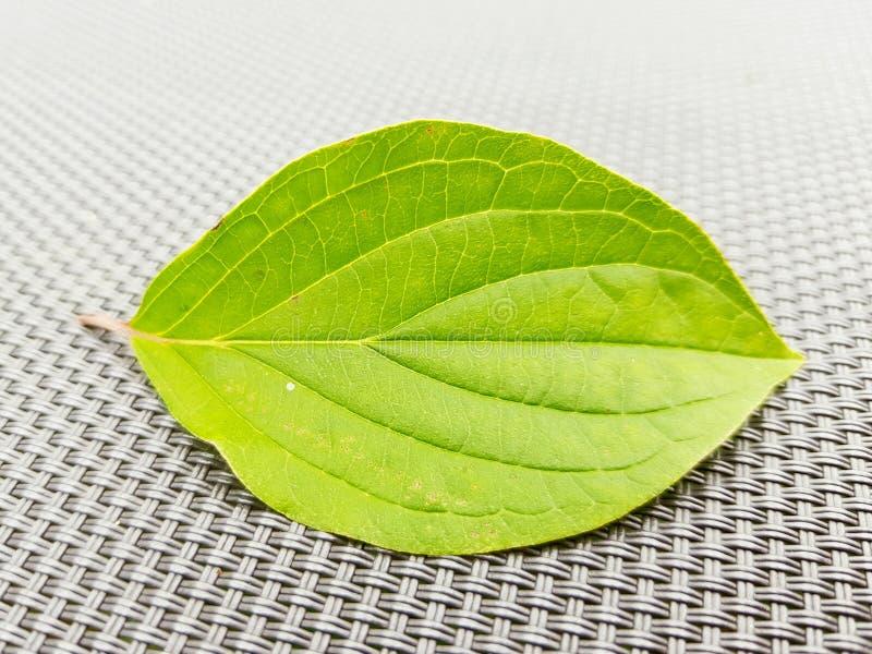 Detalj av bladstrukturen ny gr?n leaf royaltyfria foton