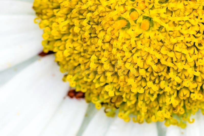 Detalj av blomman - stigma arkivfoton
