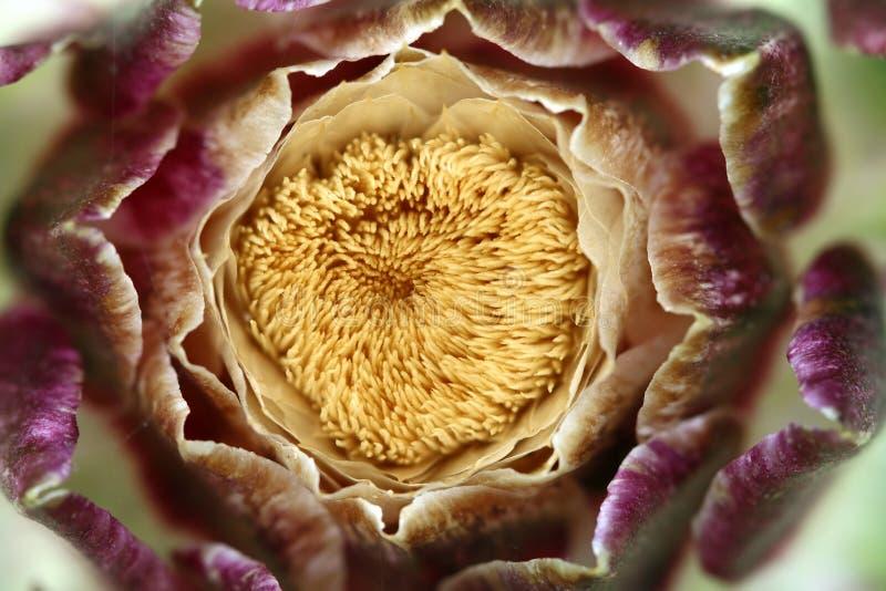 Detalj av blomninghouseleeken royaltyfri fotografi