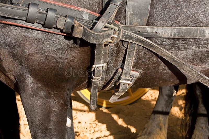 Detalj av bucklor och remmar av en häst som används för trans. av vagnar royaltyfri bild