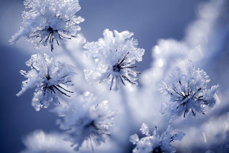 Detalj av den djupfryst blomman royaltyfri foto