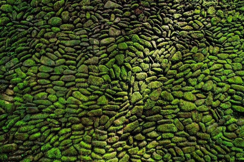Detalj av den gamla väggen med grön mossa royaltyfri bild