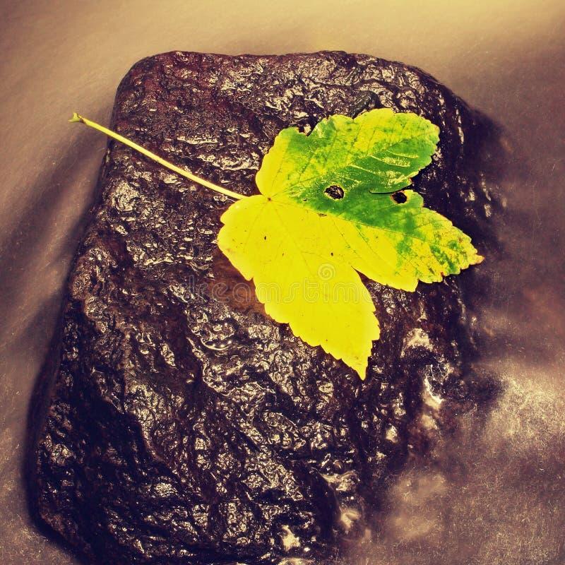 Detalj av det brutna färgrika bladet Symbol av nedgången Blad på den våta häftklammermatarestenen i kallt mjölkaktigt vatten av d fotografering för bildbyråer