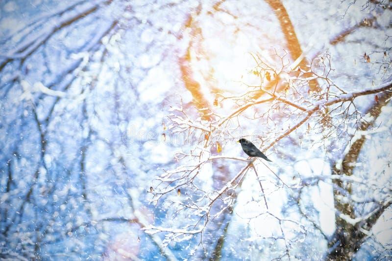 Detalj av djupfrysta trädfilialer med den korpsvarta fågeln fotografering för bildbyråer
