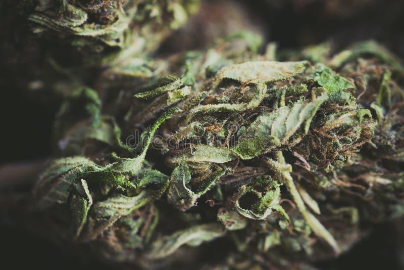 Detalj av en blomma av marijuana arkivfoto