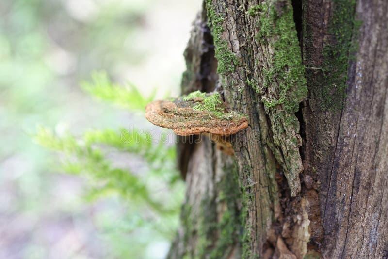 Detalj av en champinjon på en stam fotografering för bildbyråer