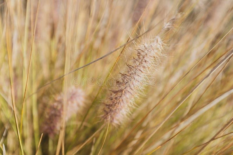 Detalj av en liten växt som växer i gräs arkivbild