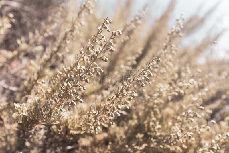 Detalj av en liten växt som växer i gräs royaltyfri bild