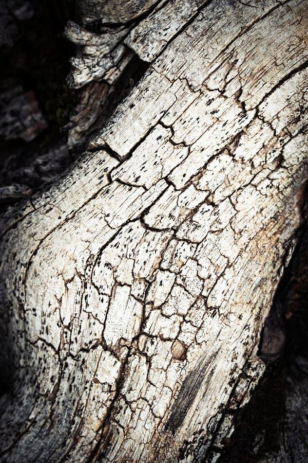 Detalj av gammalt trä med en spricka arkivbilder
