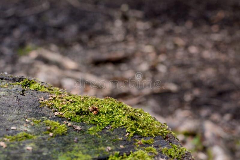 Detalj av grön mossa på en trädstam arkivbild