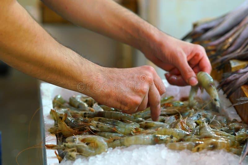 Detalj av händer av fiskhandlaren som sätter räkor på till salu skärm i den centrala marknaden av Aten royaltyfri bild