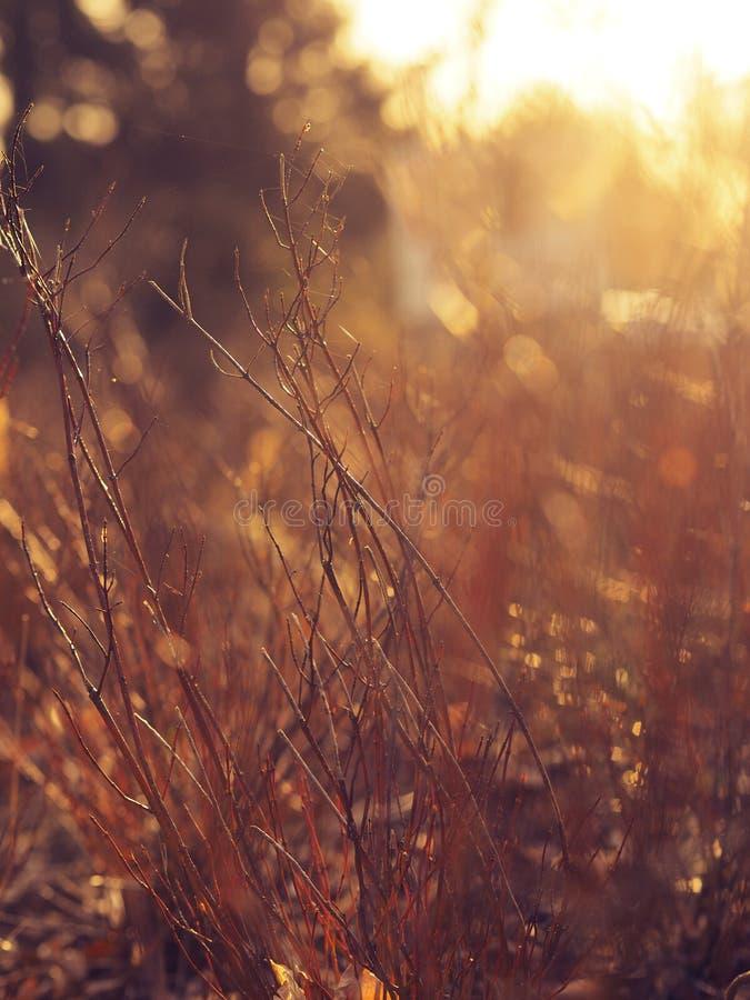 Detalj av härligt gräs med panelljuset royaltyfri bild