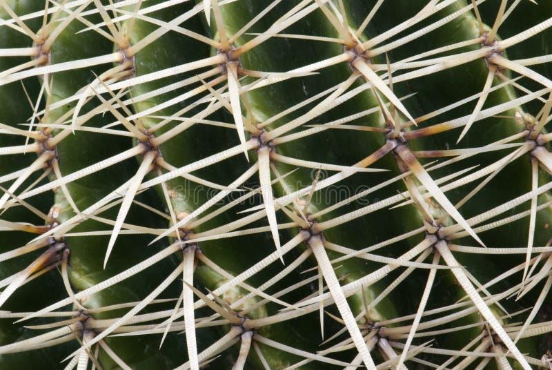 Detalj av kaktustaggar fotografering för bildbyråer