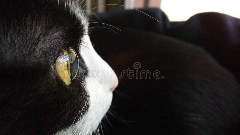 Detalj av mitt katts öga arkivfoto