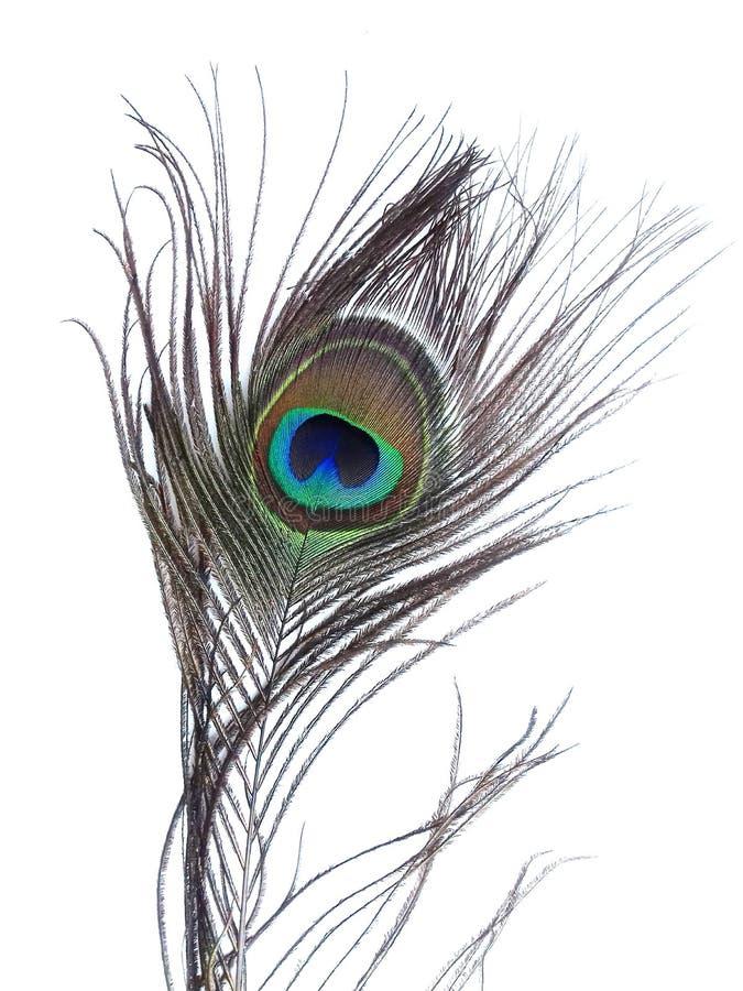 Detalj av påfågelfjäderögat på vit bakgrund fotografering för bildbyråer
