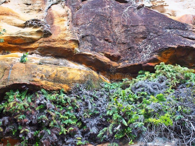 Detalj eroderad sandsten Cliff Face, Sydney, Australien royaltyfri foto