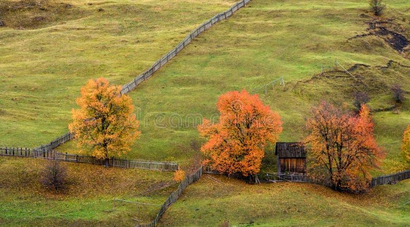 Detalj för Bucovina höstlandskap i Rumänien royaltyfri bild