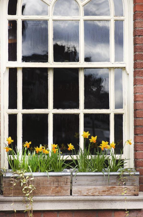 Detaljen av ett träfönster och blommor boxas på tegelstenväggen Manches royaltyfria bilder