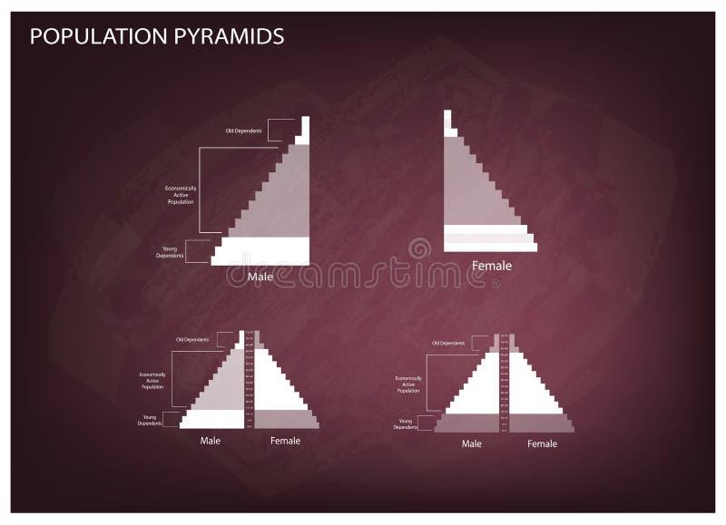 Detaljen av grafer för befolkningpyramider beror på ålder och könsbestämmer vektor illustrationer