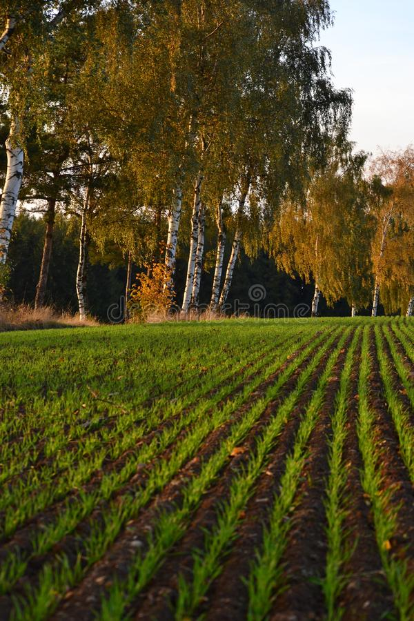 Detaljen av kärnar ur växter på ett fält, grändträd vid vägen i höstfärger fotografering för bildbyråer