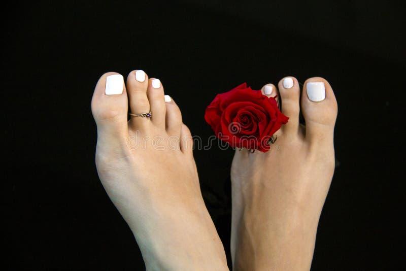 Detaljen av nätt kvinnlig fot med den röda rosblomman för skönhet som isoleras på djup svart bakgrund, den vita pedikyren, spikar royaltyfri fotografi