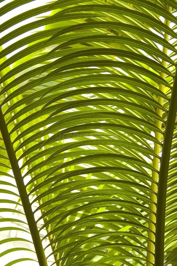 detaljen låter vara palmträdet arkivfoto