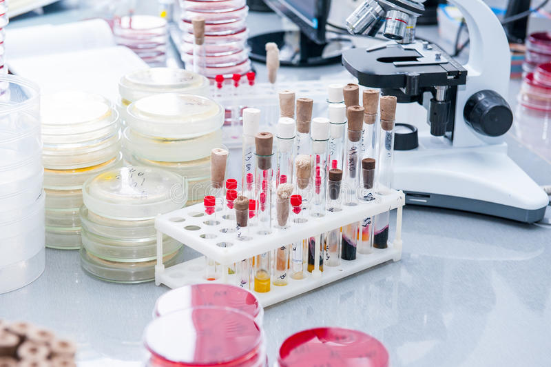 Detaljer av mikrobiologilaboratoriumet; Petri disk för bakterieatt växa, rör, mikroskop och oher Selektivt fokusera royaltyfri foto