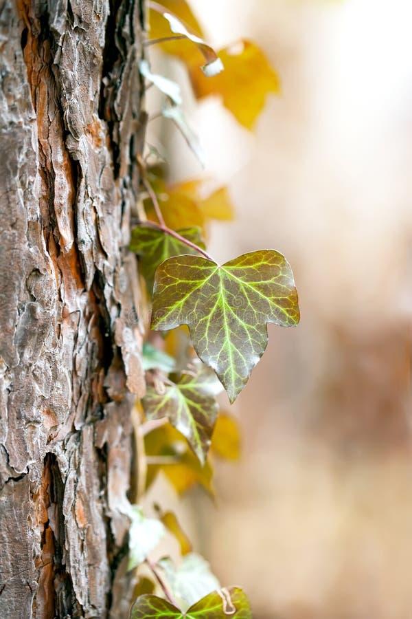Detaljer av växten över trädet royaltyfri bild