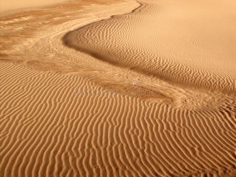 Detaljer för modell för sanddyn royaltyfri bild