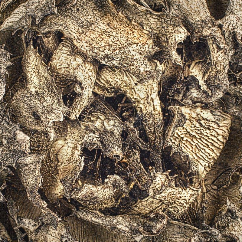 Detaljer för torkade blad av en kaktus arkivbild