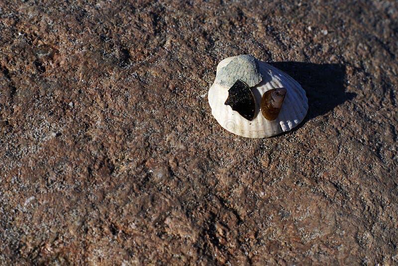 Detaljer f?r havskust Sand och beskjuter royaltyfri bild