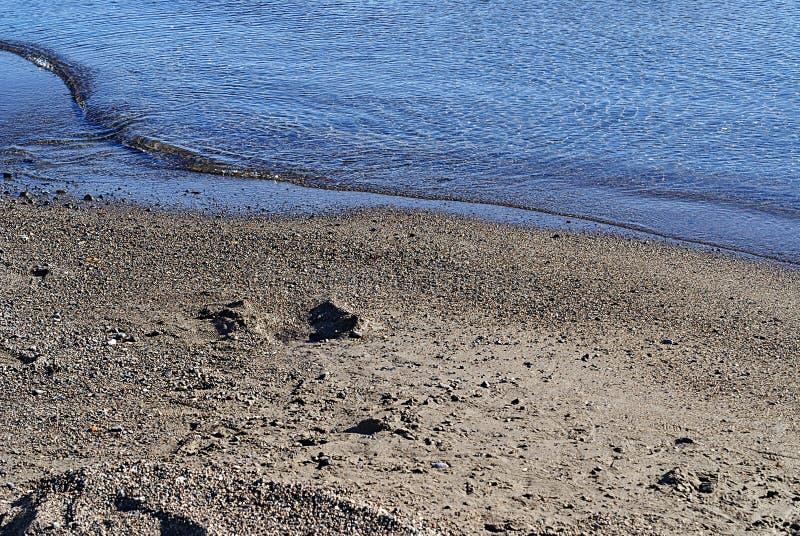 Detaljer f?r havskust sand vatten fotografering för bildbyråer