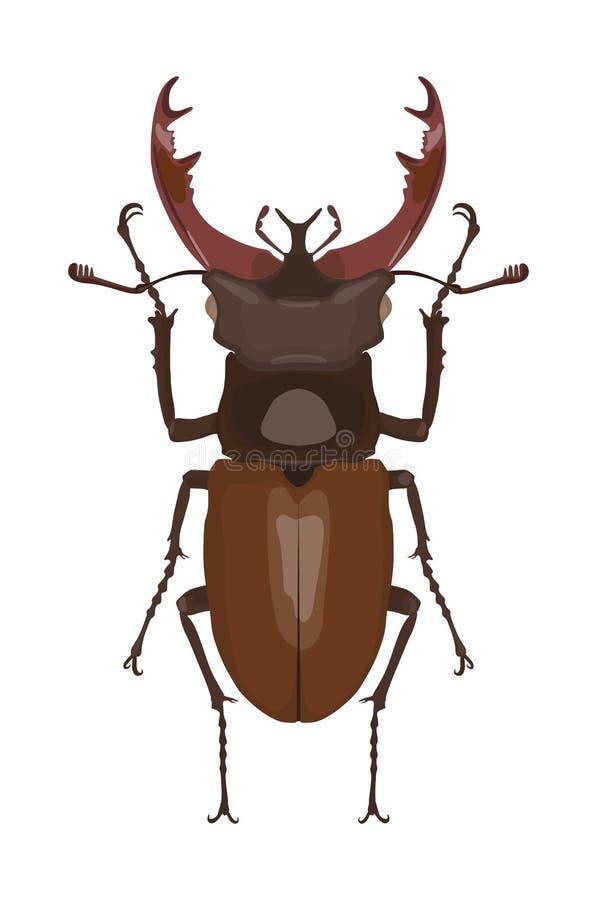 Detaljerad bild av hjortskalbaggen också vektor för coreldrawillustration vektor illustrationer