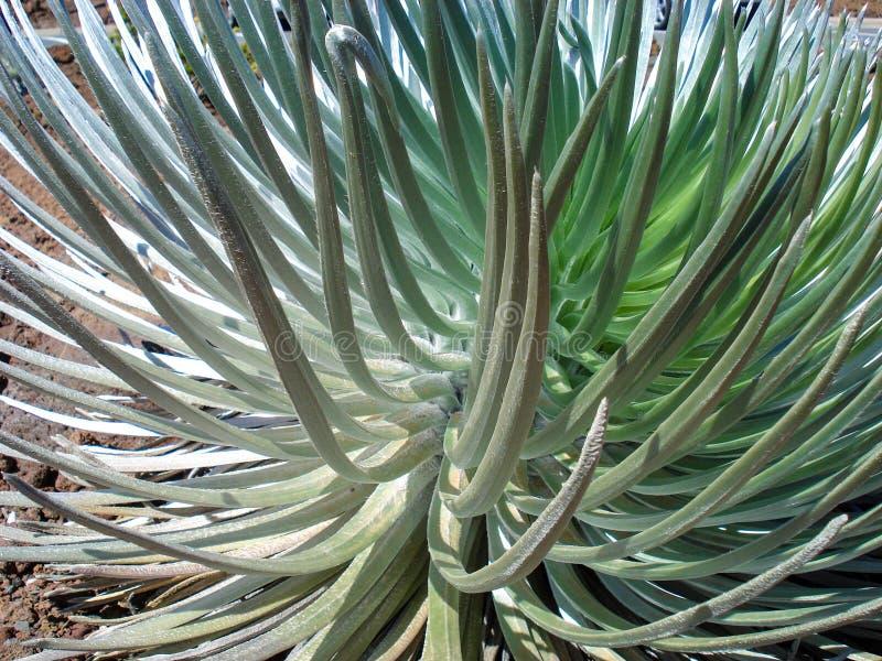Detaljerad bilddetalj av den gröna växten för bakgrunder fotografering för bildbyråer