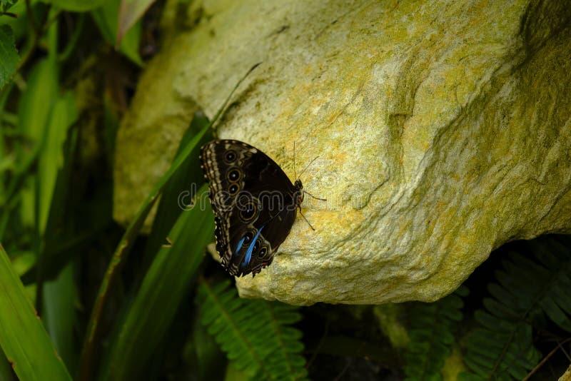 Detaljerad fjäril med färgrik bakgrund fotografering för bildbyråer