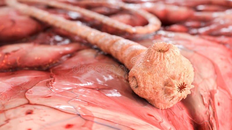 Detaljerad grisköttbandmask under microscope--3dtolkningen stock illustrationer