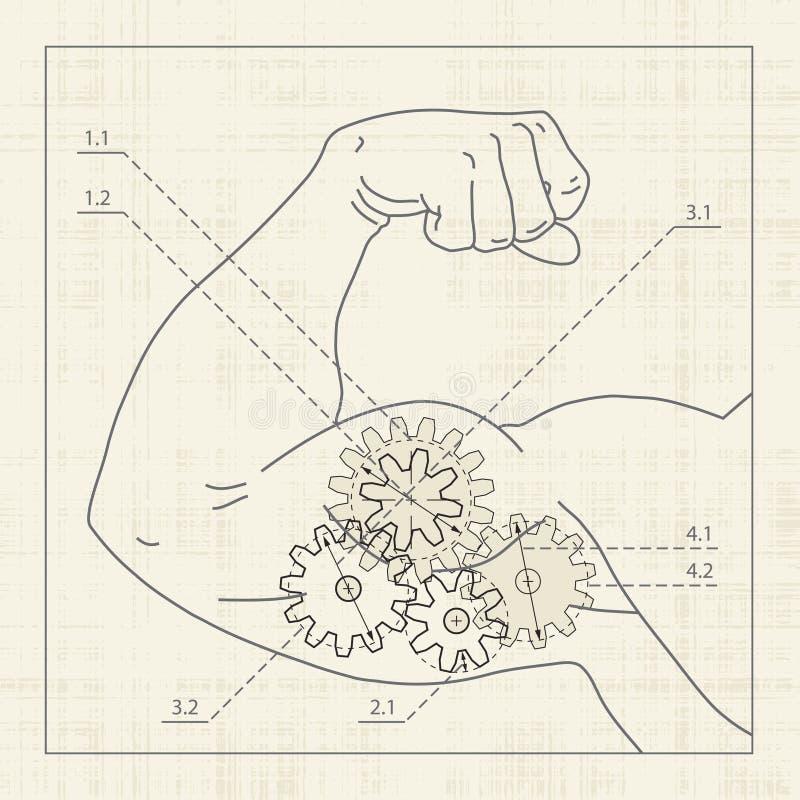 detaljerad muskel för utkastteckningskugghjul stock illustrationer
