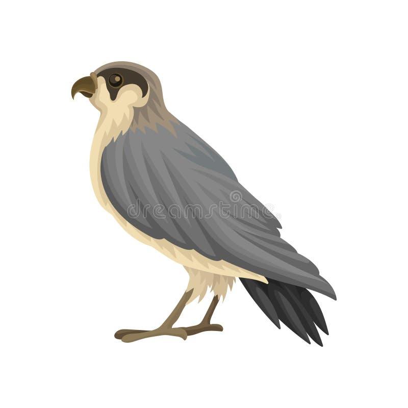 Detaljerad plan vektorsymbol av den egyptiska falken Rov- fågel med lång grå färg-svart pekade vingar och den göra hack i näbb stock illustrationer
