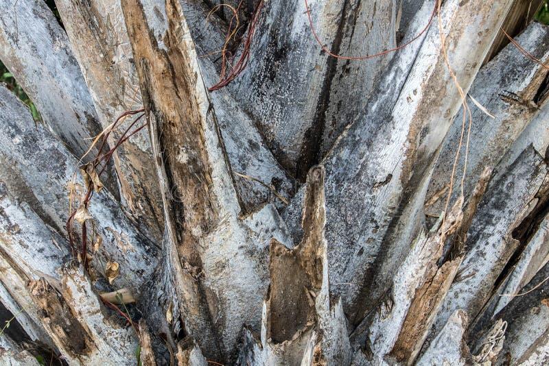 Detaljerad sikt av stammen på palmträdet arkivbild