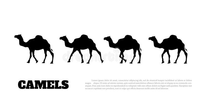 Detaljerad svart kontur av kamelhusvagnen på vit bakgrund afrikanska djur vektor illustrationer