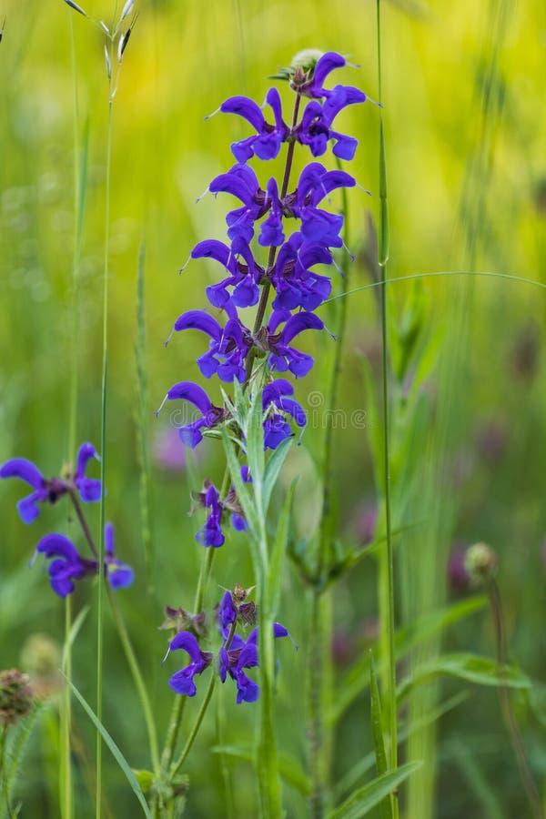 Detaljerat slut upp av en lila orkidéblomma royaltyfria foton