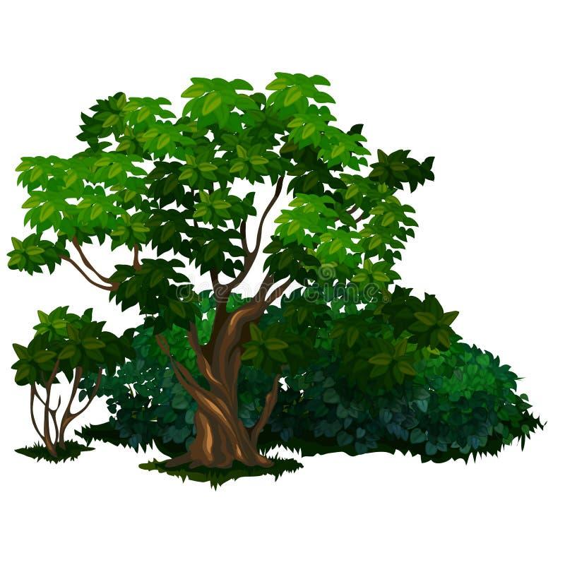 Detaljerat träd i tecknad filmstil Isolerad vektor vektor illustrationer