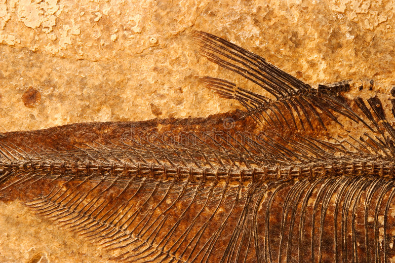 detaljfiskfossil royaltyfri foto