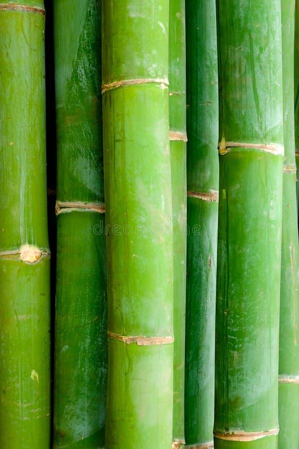 Detaljnärbildsikt av bambupinnar royaltyfria bilder