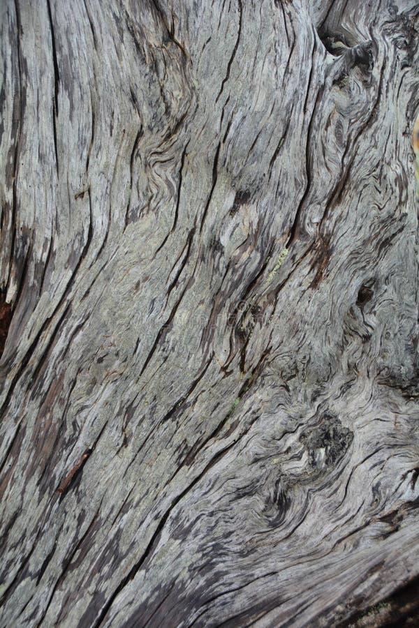 Detaljuppgifter om drivved på Kap Meares vid Oregon-kusten royaltyfria bilder